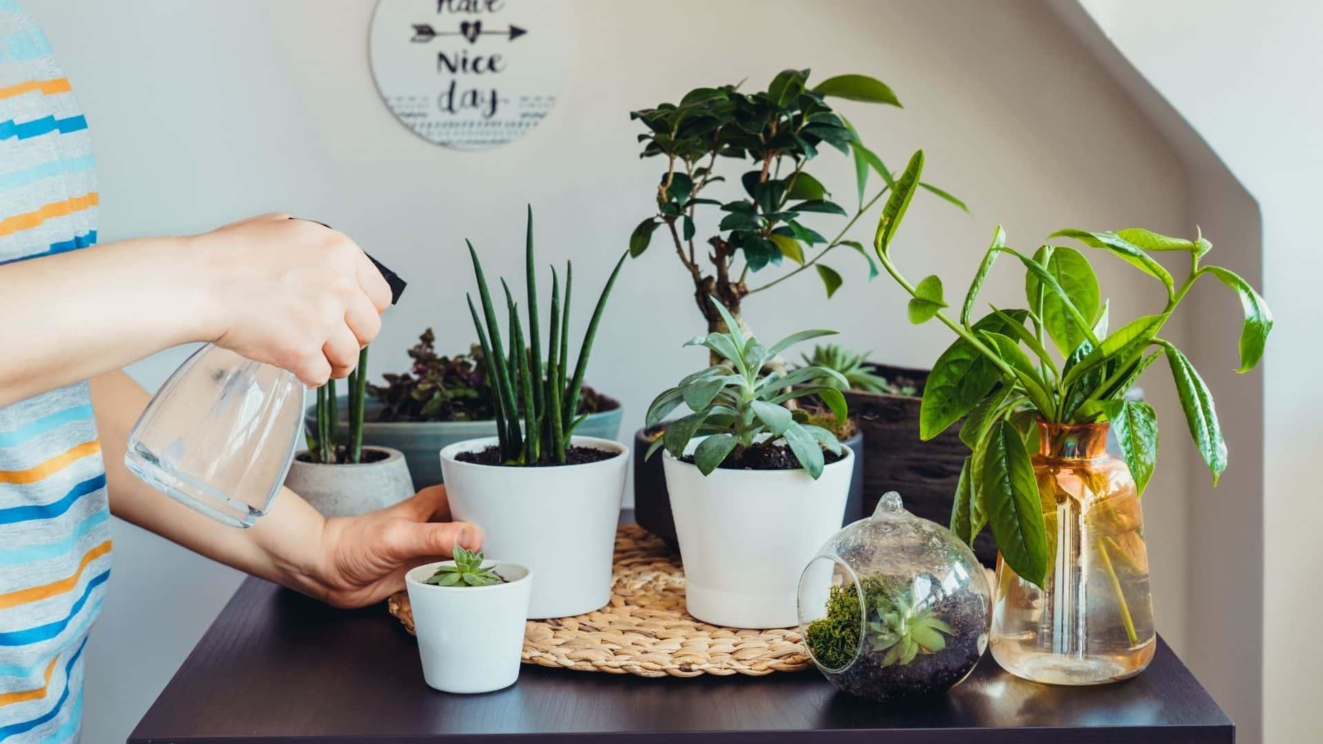 Top 10 Easiest Houseplants to Grow  Beginners Guide