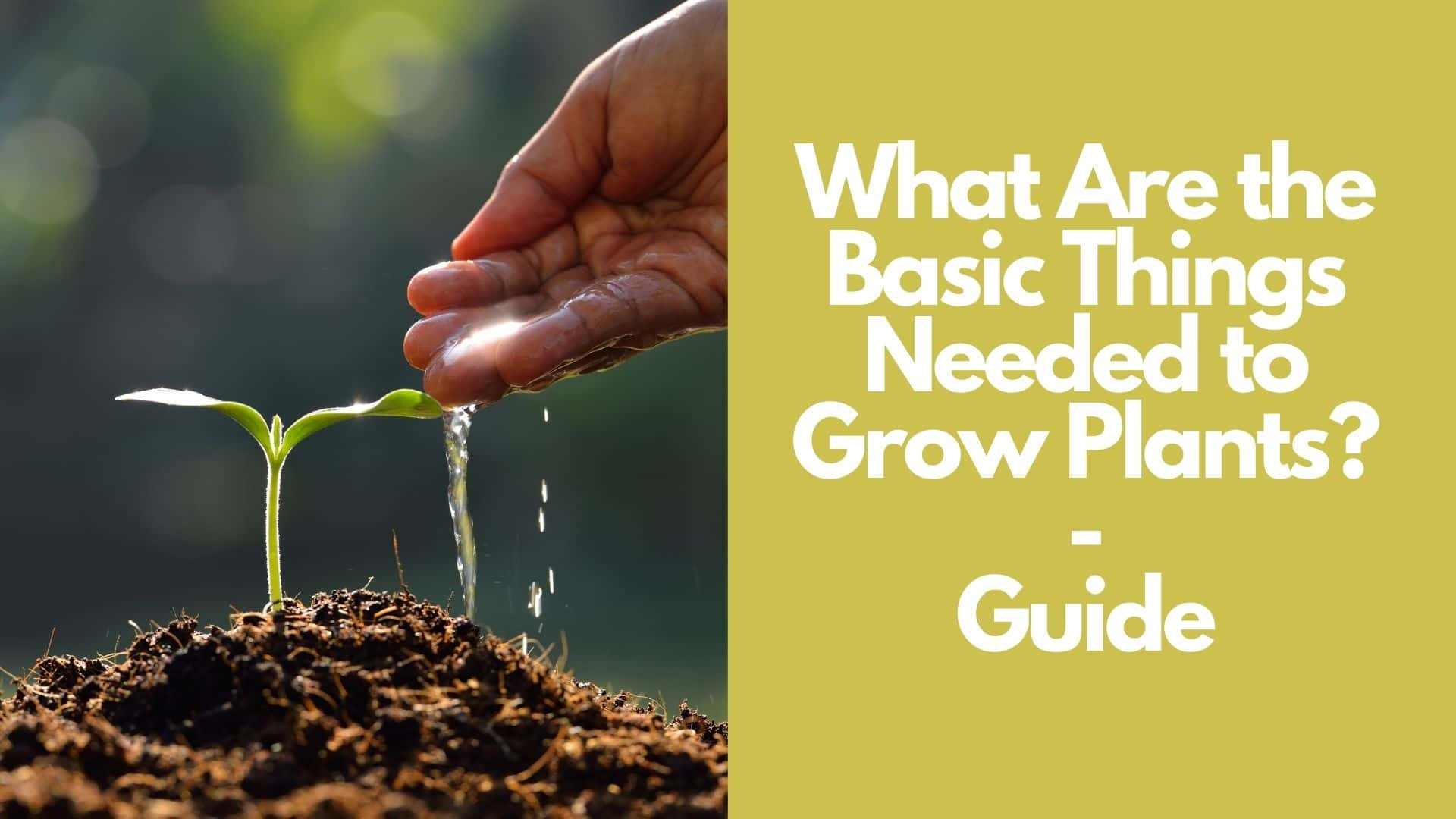 What Are the Basic Things Needed to Grow Plants  Guide