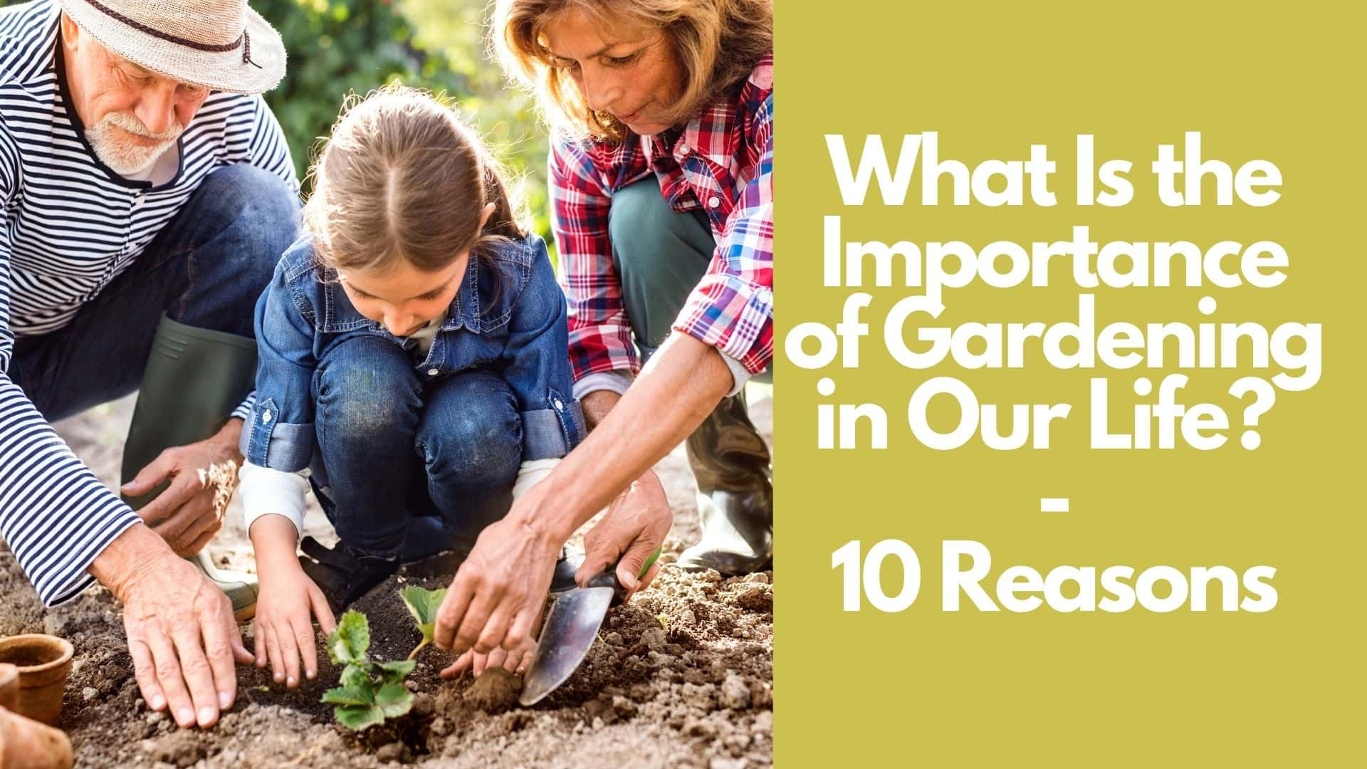 What Is the Importance of Gardening in Our Life 10 Reasons