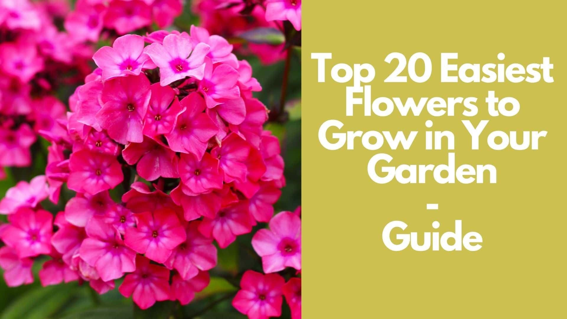 20 Easy Flowers for Beginners to Grow in Your Garden | Guide